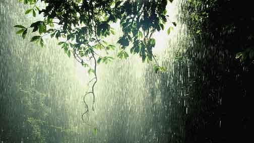 Monsoon magic and mayhem