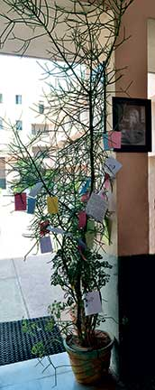 appreciation-tree