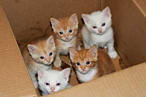 kittens-in-a-box