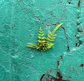 plant-on-wall
